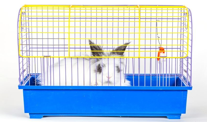 Decorative bunny in a cage