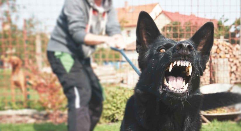 Barking at Guests