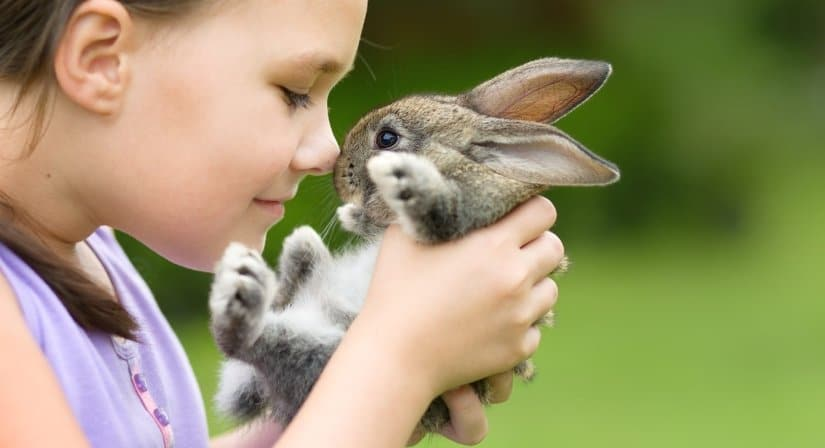 Rabbit is a Good First Pet