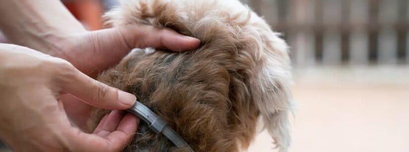 Dog Collar On Brown Dog