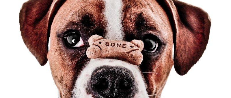 Dog Balancing Treat