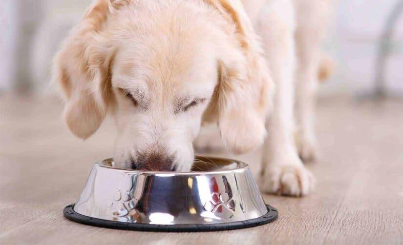 Dog eats