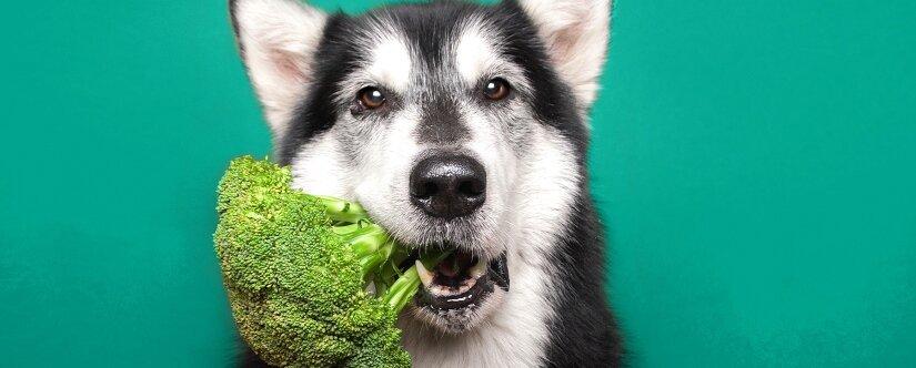 Dog eats broccoli