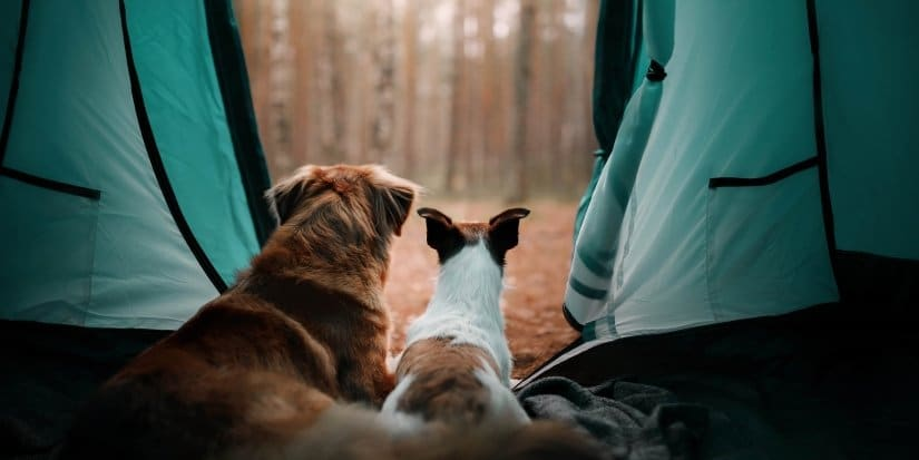 Two dogs in a tent in the forest