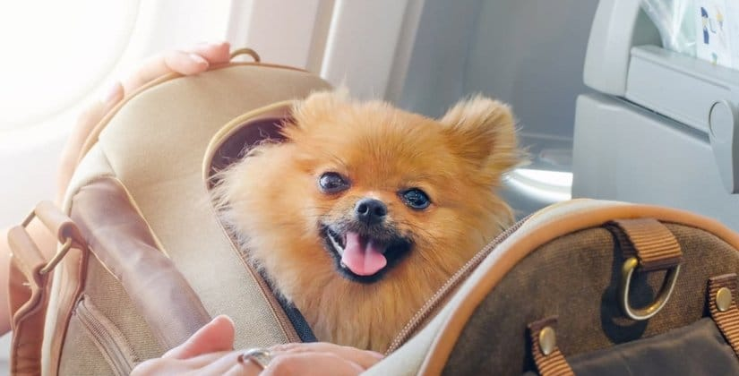 Flight with dogs
