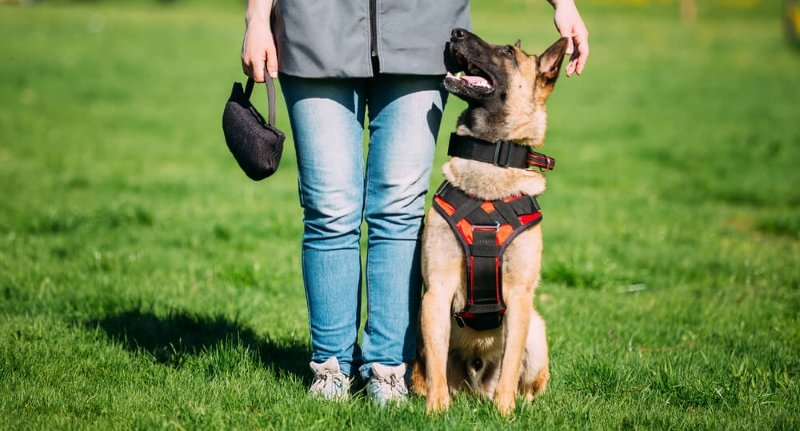 Benefits of Using Training Collars for Pets