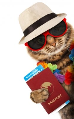 Cat passport