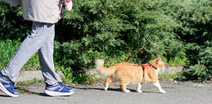 Protect Your Cat When Walking Outside